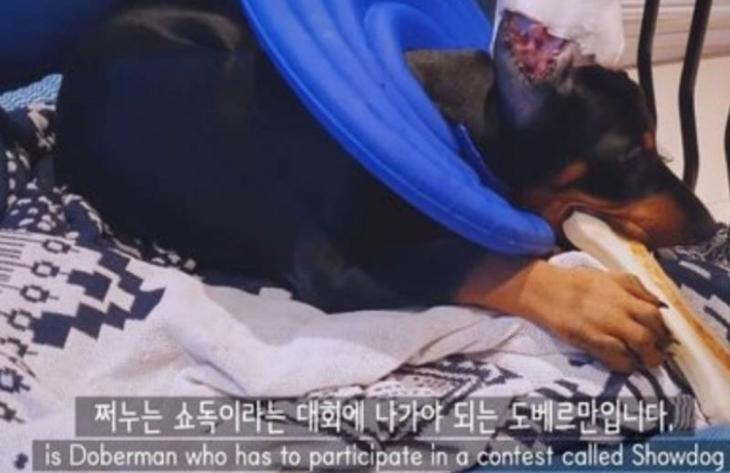 BJ서윤 유튜브 영상 / 온라인 커뮤니티